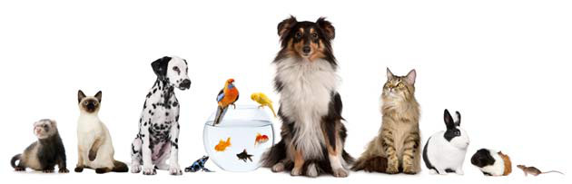 Healthy Pets with Professional Pet Care
