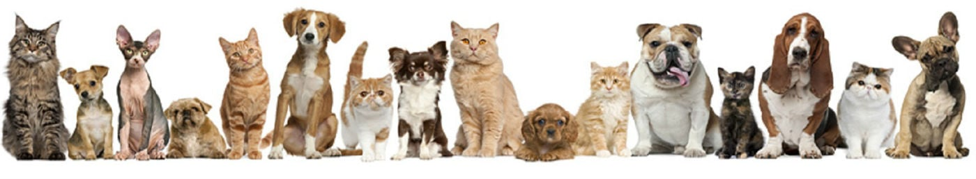 Cats Dogs Pets Love Professional Pet Sitters