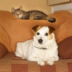 Overnight In-Home Pet Sitting Care